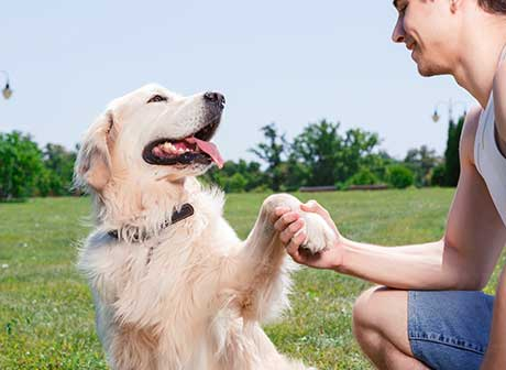 recompensas para tu perro