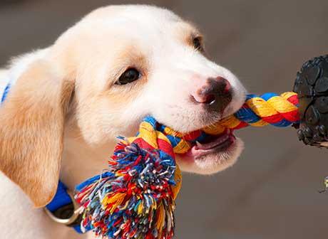 consejos para jugar con tu cachorro