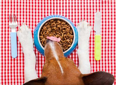 nutricion correcta perro