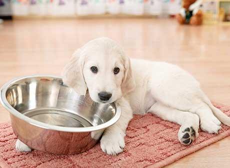 hidratación perro