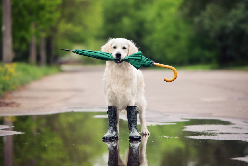 cachorros : Dogourmet